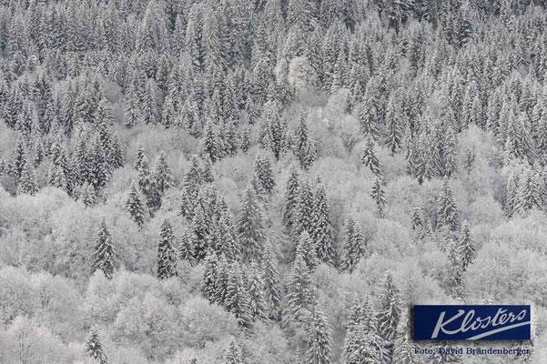P0032.Verschneiter Wald.Klosters.CH