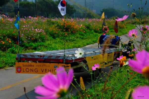KR: Solatrike in der Blumenwiese