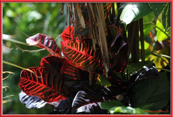 JM007 Blätter,Long Bay