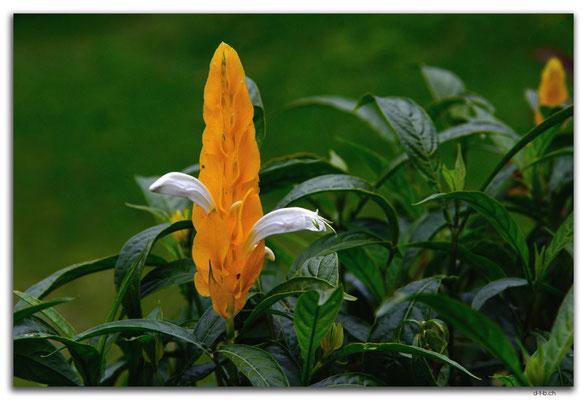 ID0184.Bedugul.Bot.Garten.Blume