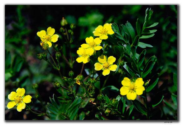 CN0319.Blume