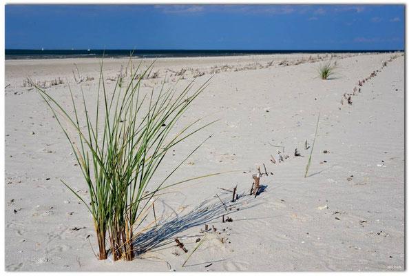 DE104.Amrum.Strandbefestigung