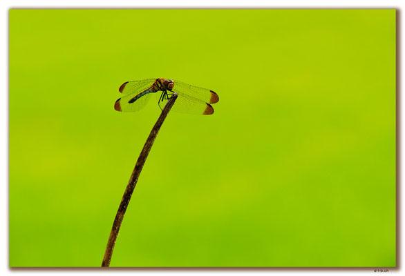 KR0133.Libelle