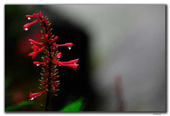 TW0057.Shifen.Blume beim Wasserfall