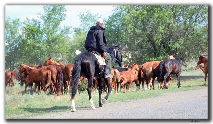 KZ0131.Pferdetreiber