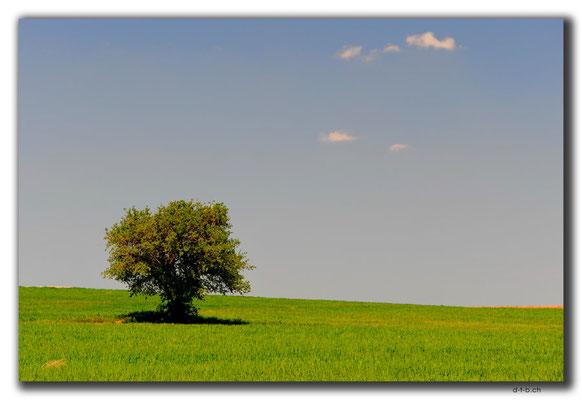 TR0657.einsamer Baum