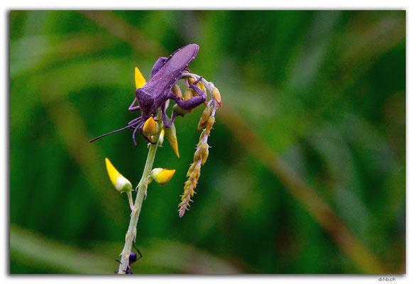 ID0066.Ubud.Insekt