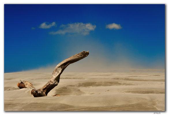 NZ0612.Farewell Spit.Ocean Beach.Drift wood