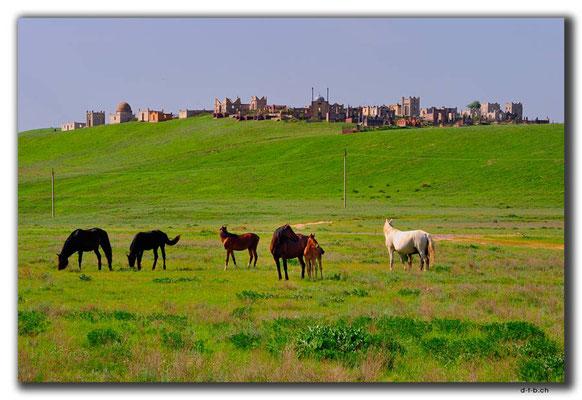 KZ0109.Friedhof und Pferde