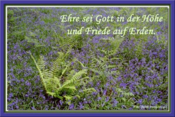 S0024 Farn und Blumen,Schottland.Lukas 2.14