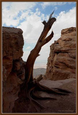JO040.Am Ende der Welt.Petra