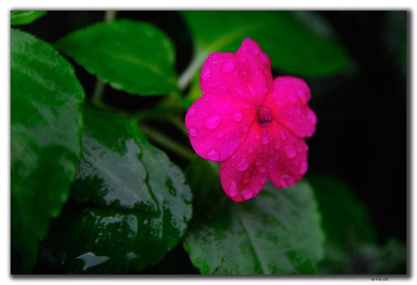 TW0051.Jinguashi.Blume