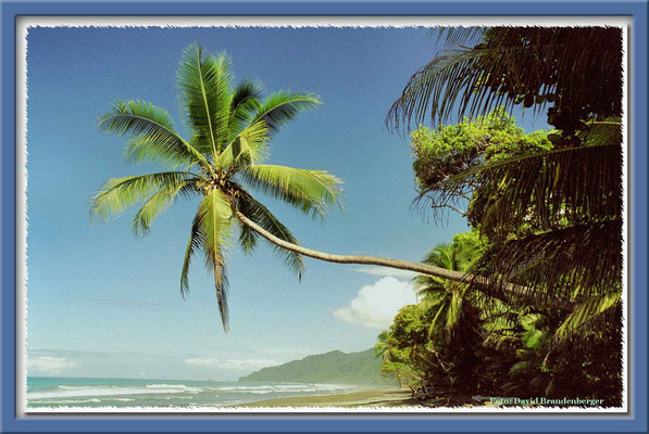 19.Playa Carate,P.N. Corcovado,Costa Rica