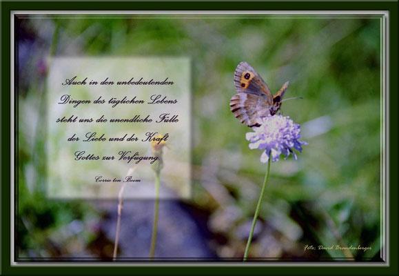 S0050.Wald-Wittwenblume & Schmetterling.CH.Text: Corrie Ten Boom