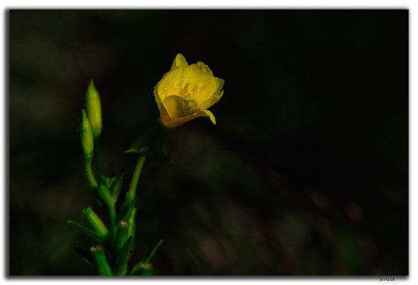 KR0126.Blume