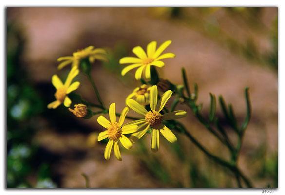AU0393.Carnarvon.Blume