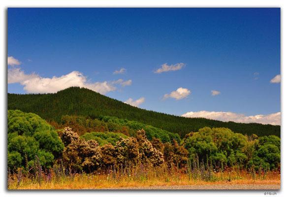 NZ0642.Motupiko Valley