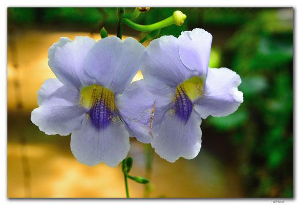 ID0136.Ubud.ARMA.Blume