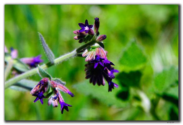 TR0689.Ihlara Valley.Blume