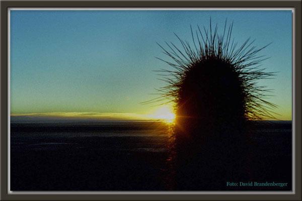 73.Kaktus im Altiplano,Bolivien