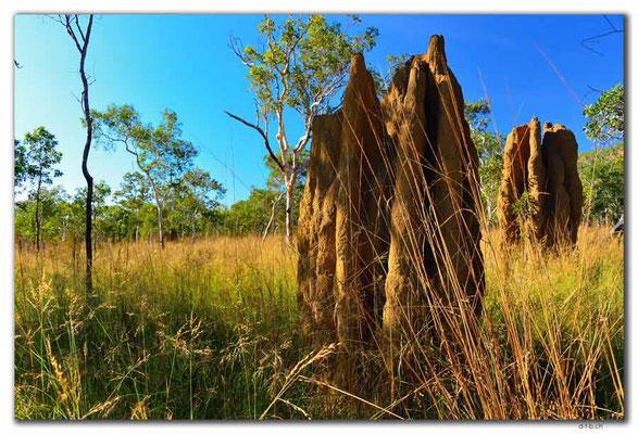 AU0045.Kakadu N.P. Termitenbau