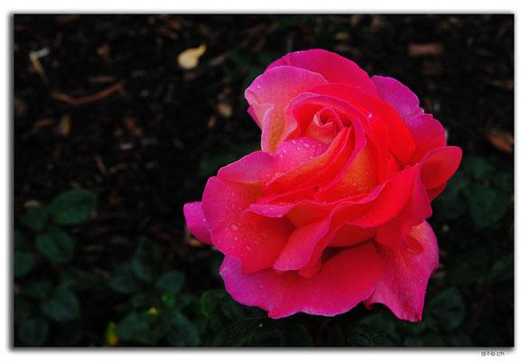 AU0636.Perth.Peace Memorial Rose Garden