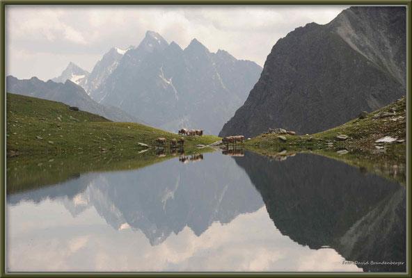 A0272.Novaier Seeli und Kühe.Klosters.CH