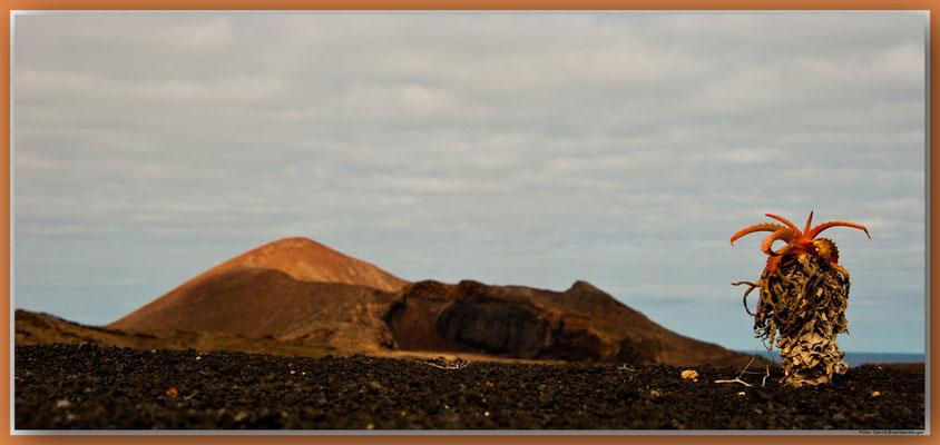 LAN071.Kaktus und Vulkane