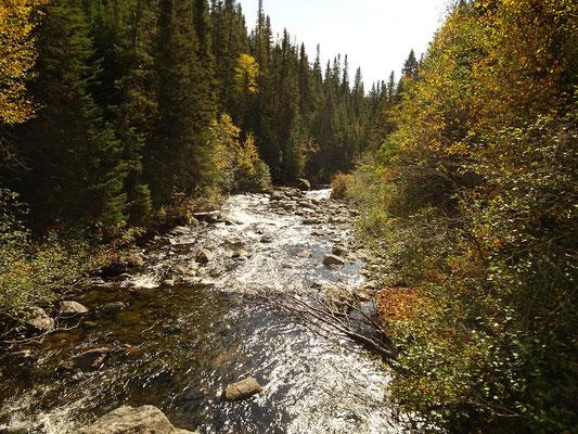 Herbsttour in Quebec: Blick auf einen kleinen Fluss im Parc national de la Gaspésie.