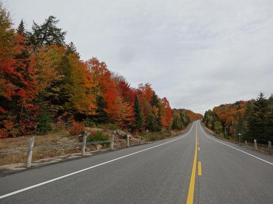 Und noch ein Bild vom Highway 60 im Algonquin Provincial Park während der Fall Colors.