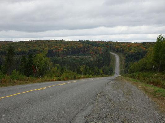 Urlaub in New Brunswick: Noch mehr Wald entlang der Appalachian Range Route.