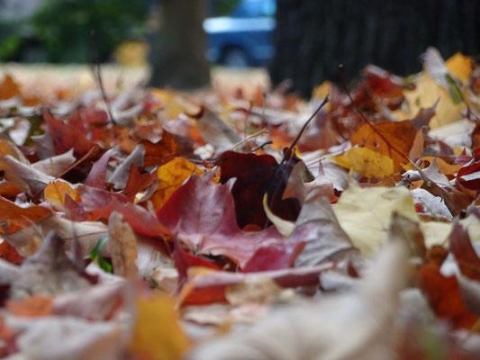 Herbst in Toronto: Die meisten Bäume haben nun die Blätter abgeworfen.