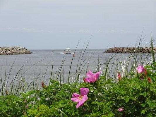 Unterwegs an der Küste Nova Scotias.