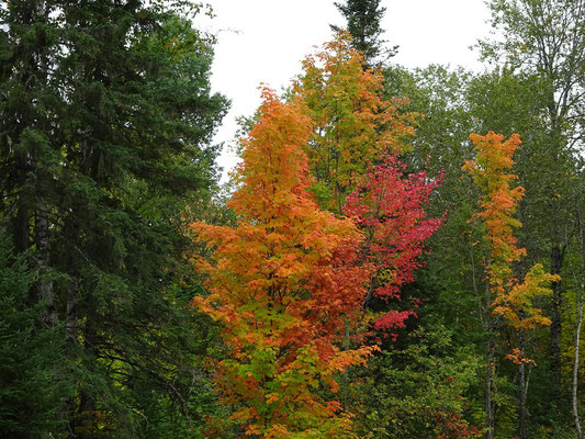 Urlaub in Quebec: Herbstliche Fall Colors im Lac Temiscouata Nationalpark.