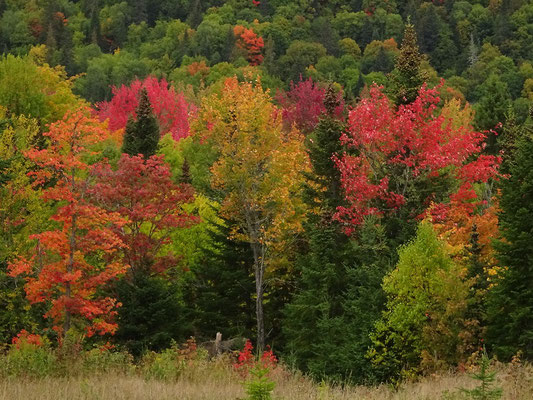 Herbst in New Brunswick: Fall Colors entlang der Appalachian Range Route.