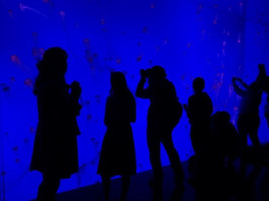 Lichtspiele im Ripley's Aquarium of Canada