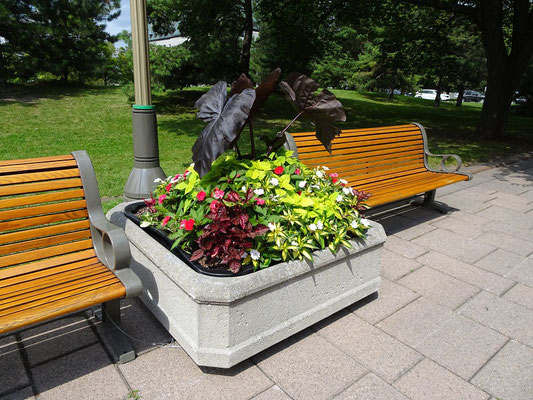 Urlaub in Ottawa: Grün und Blumen allerorten, hier in der Wellington Street.