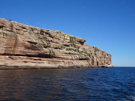 Urlaub in Quebec: Zahlreiche Vögel haben sich an der felsigen Steilküste der Bonaventure Insel eingenistet.