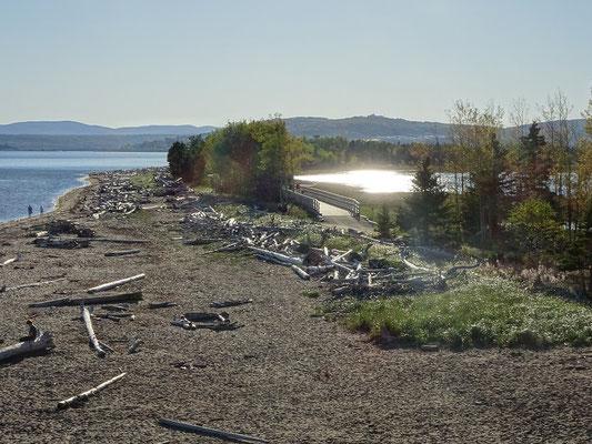 Urlaub in Quebec:  Strand mit Treibholz im Westen des Forillon Nationalparks.