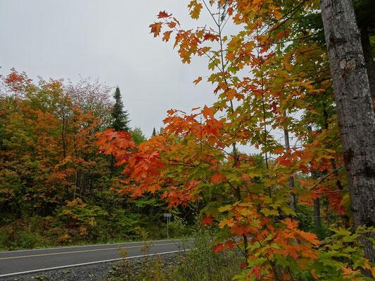Urlaub in Quebec: Herbstliche Farben im Parc national du Lac-Temiscouata.