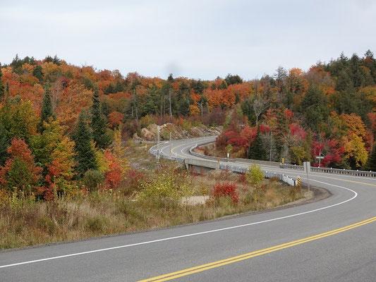 Der Highway 60 schlängelt sich durch den Algonquin Provincial Park und macht während der Fall Colors eine gute Figur.
