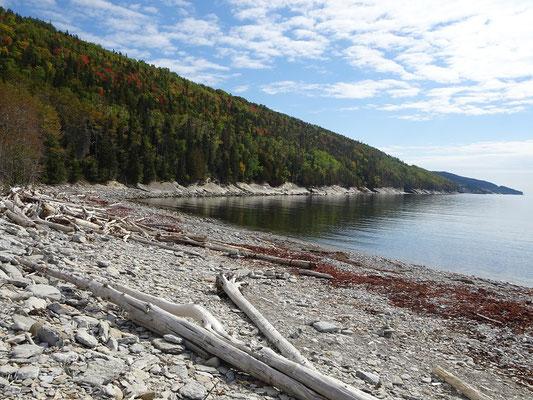 Herbsttour durch Quebec: Treibholz am Strand bei Petit-Gaspé im Westen des Forillon Nationalparks.