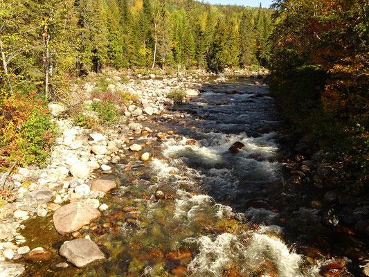 Herbsttour in Quebec: Blick auf einen kleinen Seitenarm des Riviére Sainte-Anne im Parc national de la Gaspésie.