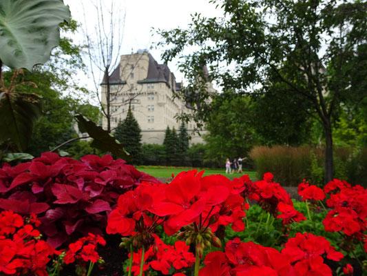 Urlaub in Ottawa: Blumen im Major's Hill Park.