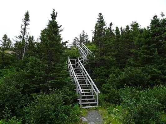 Urlaub in Neufundland: Unterwegs im Terra Nova Nationalpark.