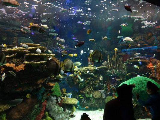 Vielfalt im Ripley's Aquarium of Canada.