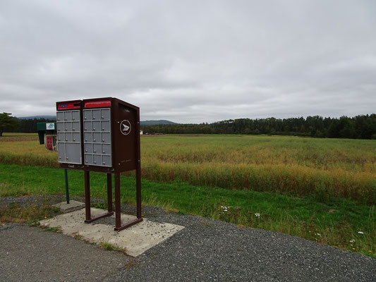 Urlaub in New Brunswick: Einsamer Briefkasten an der Appalachian Range Route.