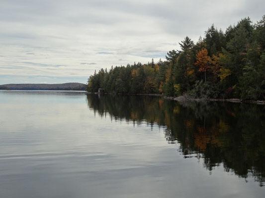 Typisches Ontario-Bild mit Wasser und Bäumen aus dem Algonquin Provincial Park.