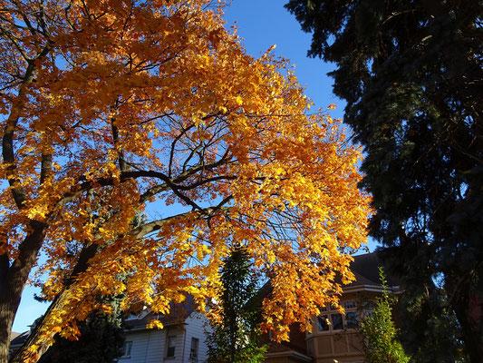 Herbst in Toronto: Orange ist Trumpf.