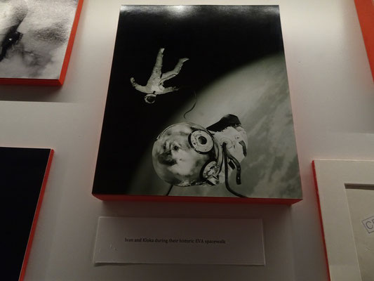 """Nuit Blanche 2016 in Toronto: Hund im Weltraum beim Exponat der """"Academy of the Suspicious."""""""